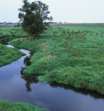 Stream at edge of field.